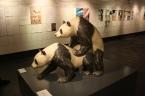Museum-of-Sex-Pandas