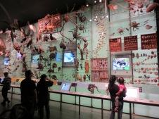 Natural History - NYC